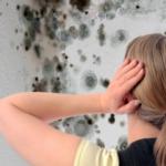 Vind kampen mod skimmelsvamp